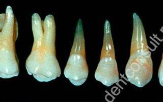 Сколько каналов в 7 верхнем зубе