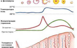 Почему повышается температура перед месячными