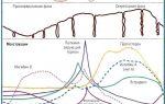 Все о функциях и структуре яичников