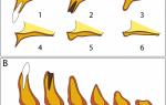 Способы коррекции атрофии альвеолярного отростка в зависимости от патологического состояния