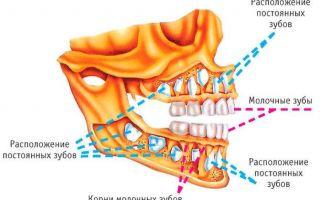 Сколько зубов должно быть у ребенка в первые годы жизни