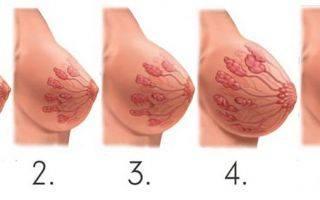На какой неделе растет грудь?