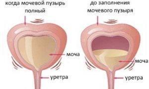 Какое количество воды нужно выпить перед узи мочевого пузыря?