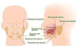 Протоки слюнных желез: определение, строение, виды, выполняемые функции, анатомия, физиология, возможные заболевания и методы лечения