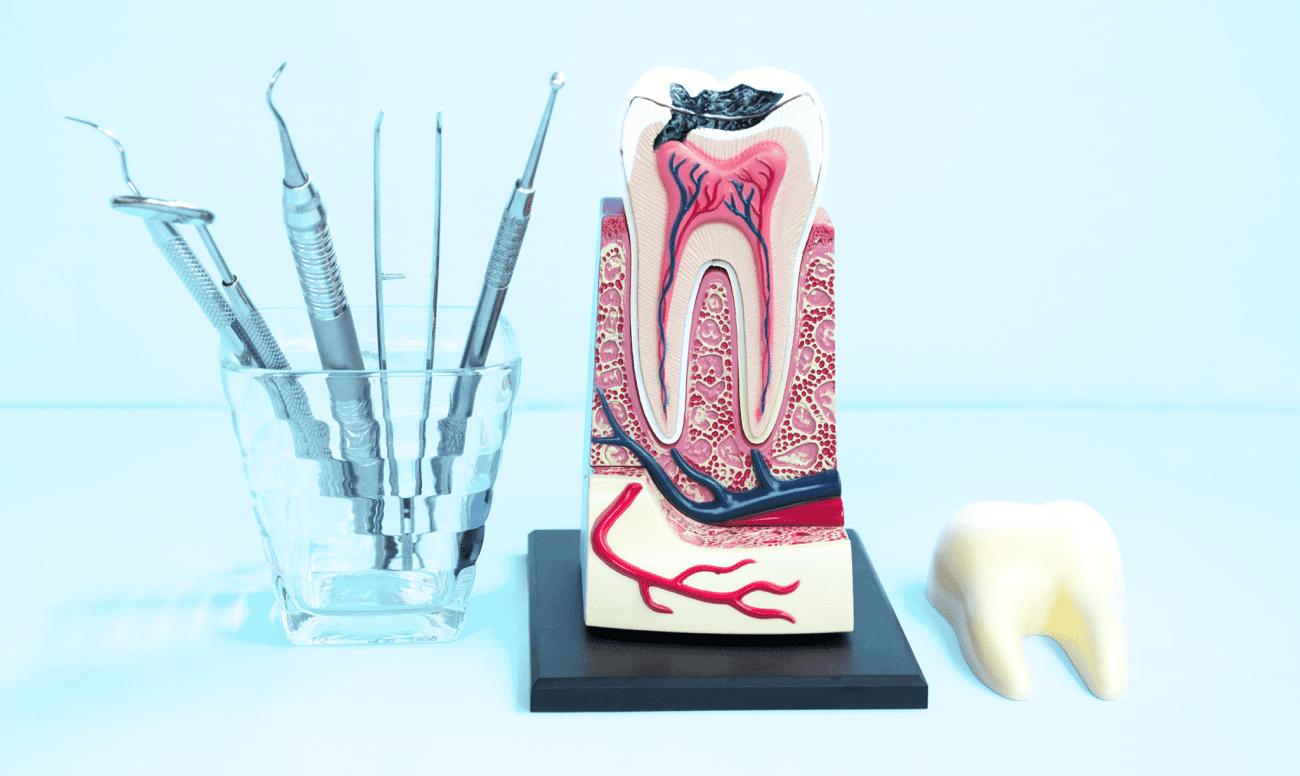Сколько корневых каналов в зубах человека: анатомия и функции, таблица и схема расположения