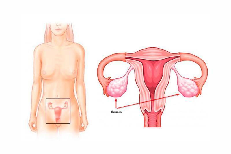 Есть ли шансы стать мамой у женщины с одним яичником