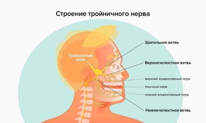 Невралгия тройничного нерва: почему болит лицо?