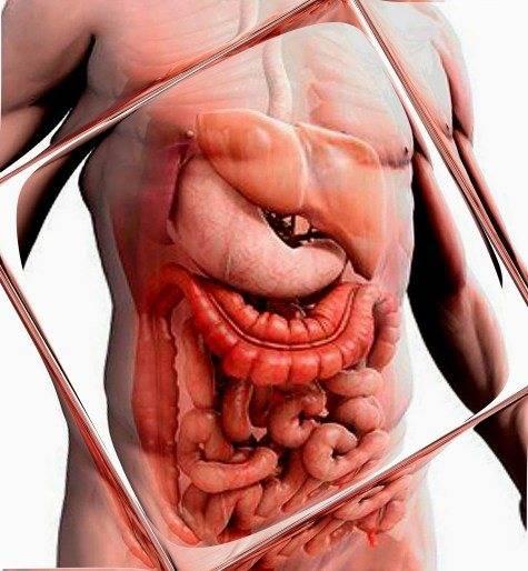 Диета при кандидозе в кишечнике
