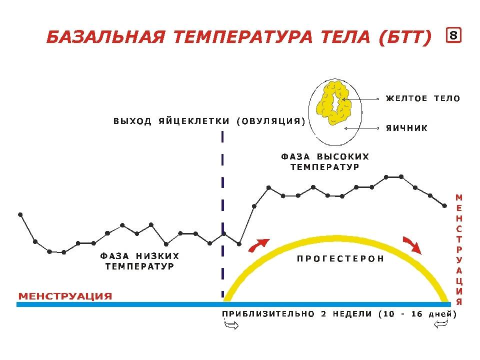 Что расскажет базальная температура при беременности?