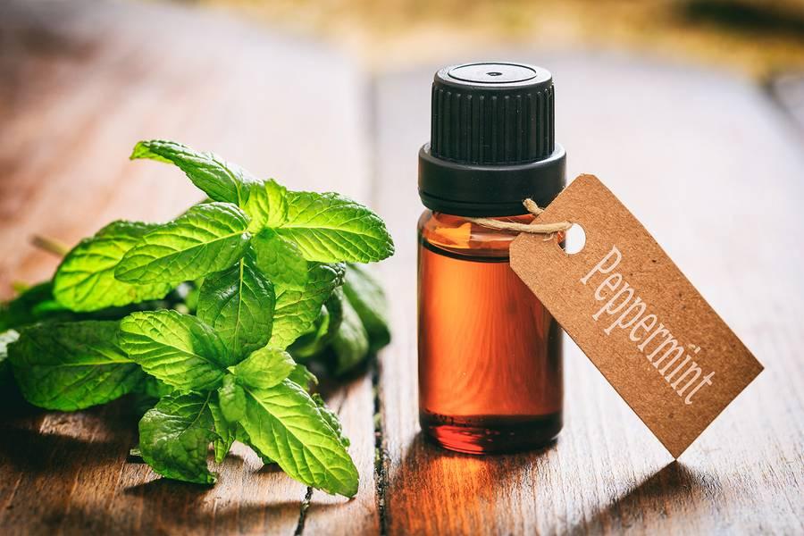 Эфирное масло пачули: свойства, применение для кожи лица и волос, отзывы