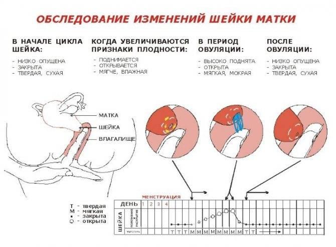 Что вызывает боли в животе до менструации