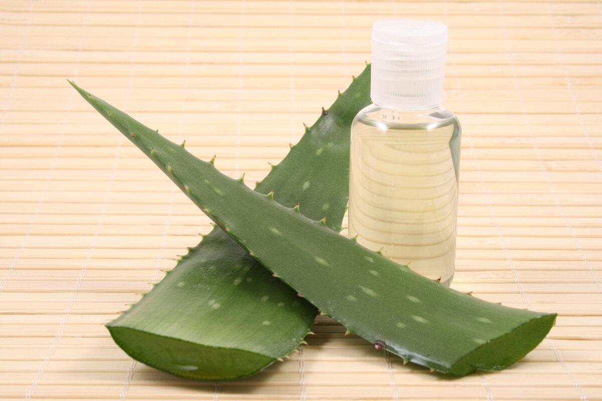 Алоэ — лечебные свойства, польза и вред, рецепты применения в народной медицине и косметологии. как приготовить настойку и употреблять