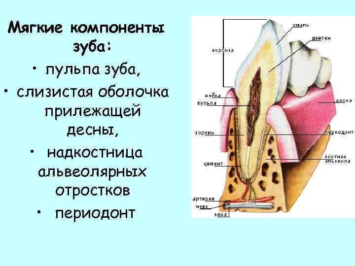 Причины и лечение воспаления надкостницы зуба
