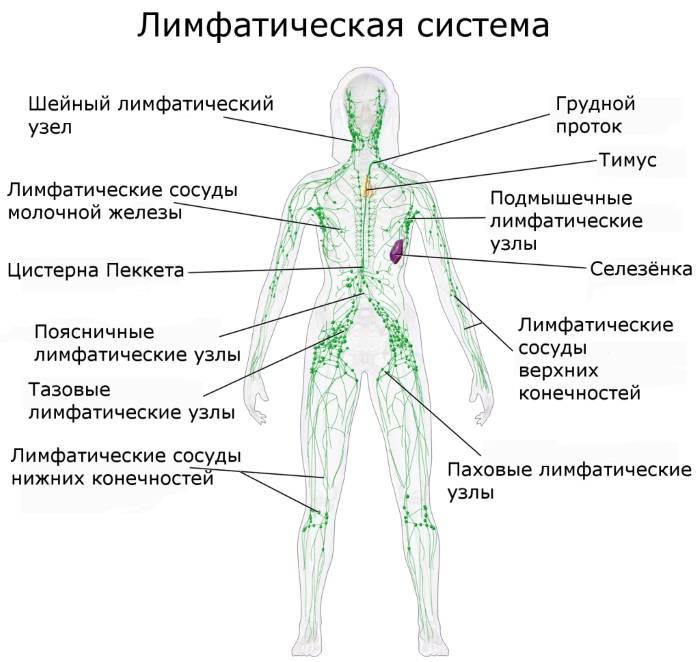 Аксиллярные лимфоузлы в молочной железе: норма и размер, воспаление