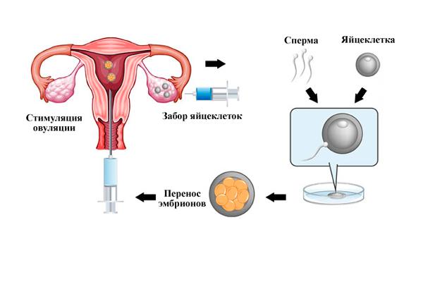 Спкя и беременность