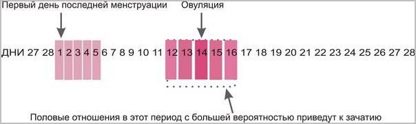 Ппа в дни овуляции и до неё (+статистика беременностей!)