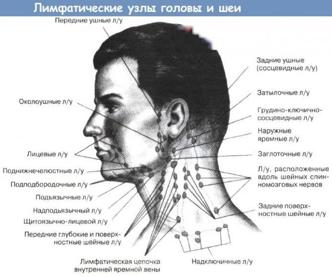 Аксиллярные лимфатические узлы и молочная железа: где связь?