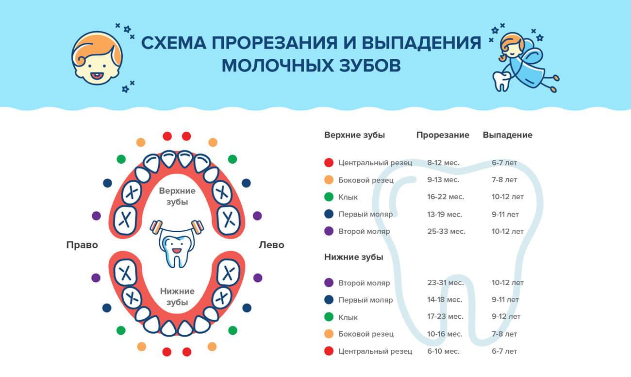 Схема выпадения молочных зубов у детей и допустимые отклонения от нормы