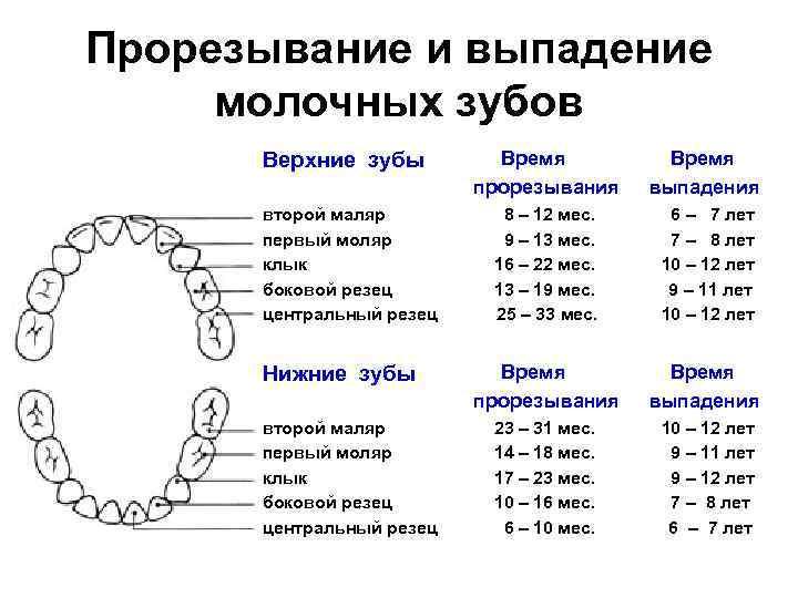 Во сколько лет выпадает первый молочный зуб