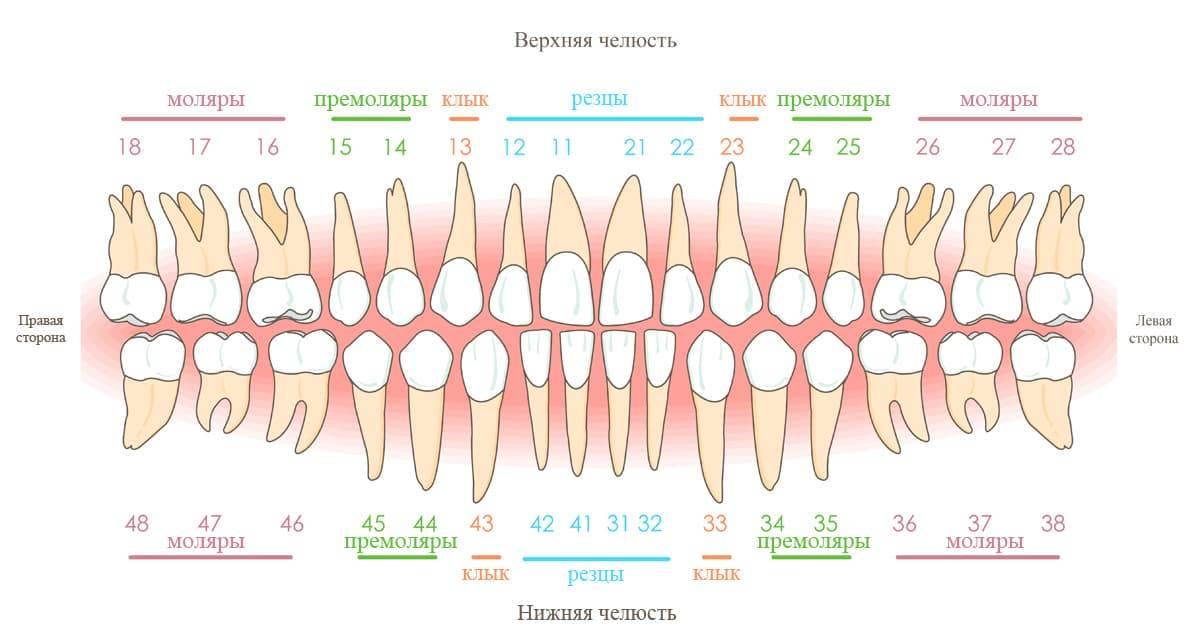 Сколько каналов в зубах верхней и нижней челюсти