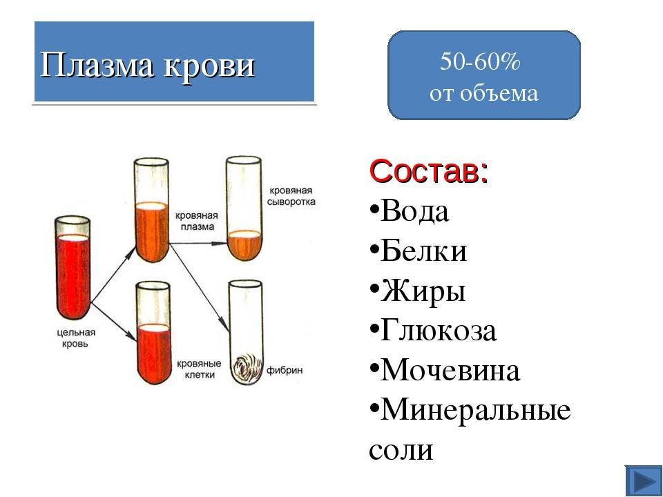 Главные составляющие крови человека