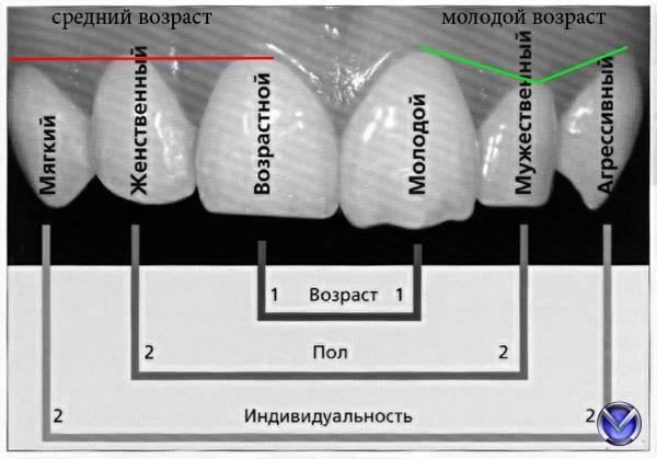 Название зубов: как понимать обозначения стоматологов