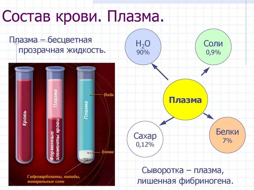 Из чего состоит плазма крови и для чего она нужна в медицине