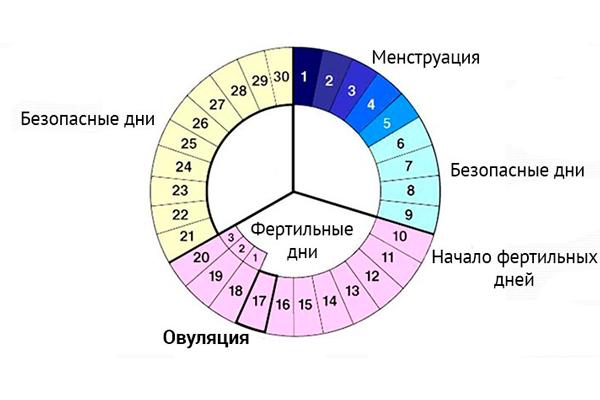 Как рассчитать овуляцию при 28-дневном цикле
