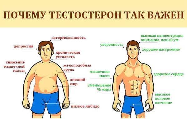 Что такое тестостерон, на что он влияет и как повысить