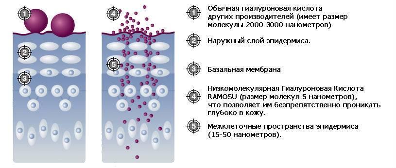 Гиалуроновая кислота и ее эффективность для кожи лица