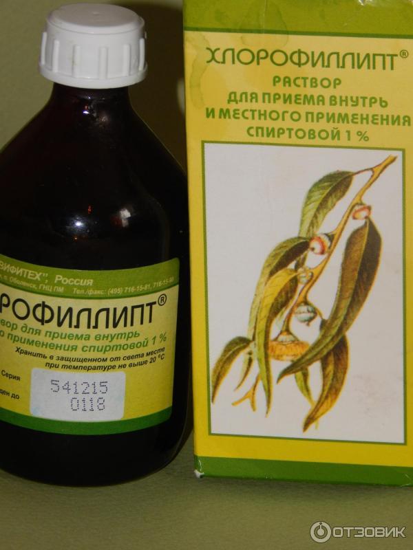 Хлорофиллипт – копеечное средство от 15 болезней. вот рецепты, проверенные временем