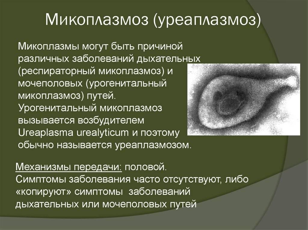 Урогенитальные инфекции: что такое микоплазмоз у женщин и чем он опасен
