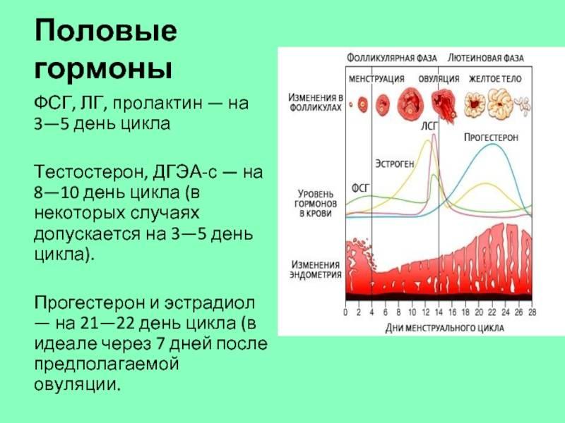 Когда сдавать на анализы эстрогены. норма гормона у женщин