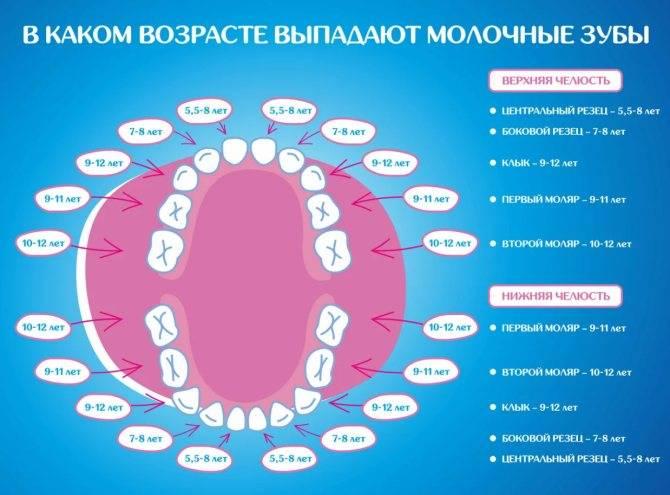 Температура при прорезывании зубов у детей: причины, сколько дней держится и как ее снизить?