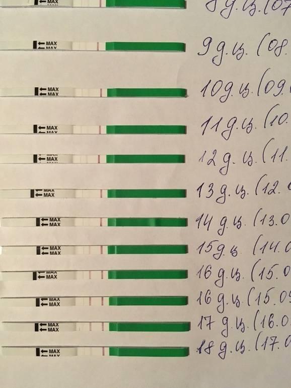 Что такое тест на овуляцию и как правильно оценить его результат?