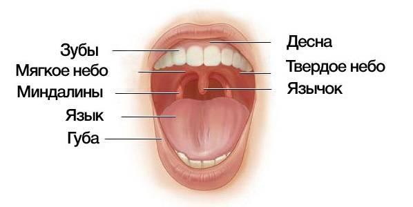 Почему опухает язычок в горле