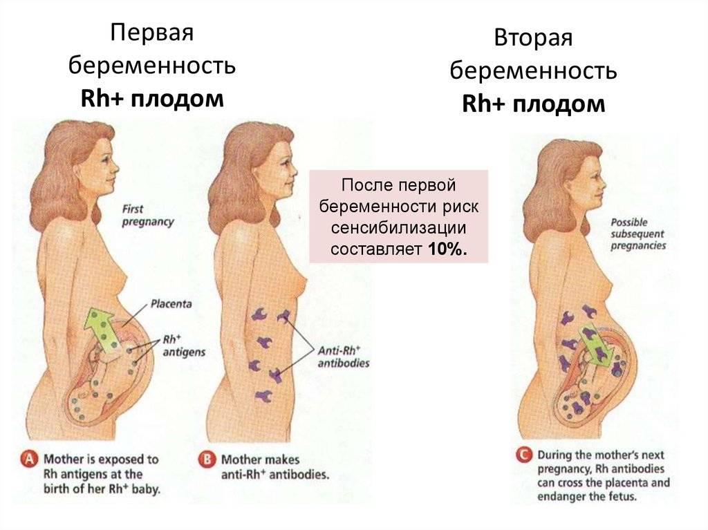 Может ли после зачатия тянуть и болеть живот