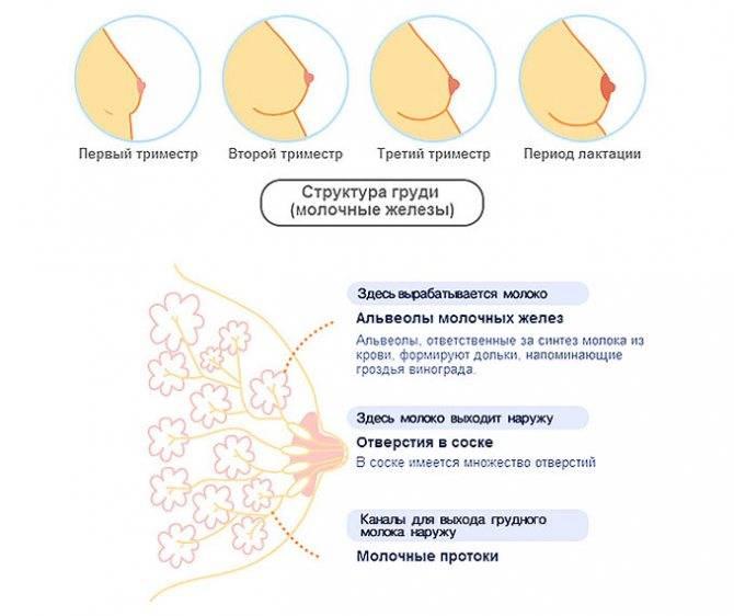 Причины появления крови из груди