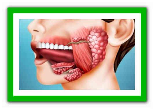 Киста слюнной железы что это такое и как лечить? лечение кист околоушной, подчелюстной, подъязычной и малой слюнных желез