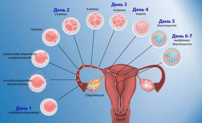 Первые дни после зачатия — ощущения