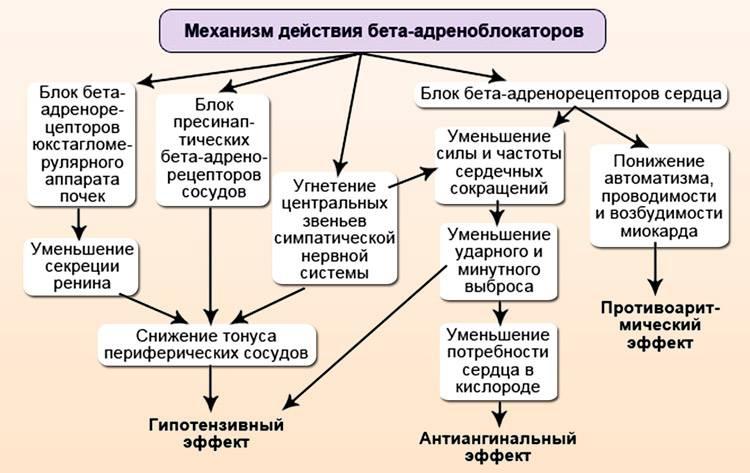 Метилксантины. препараты, механизм действия, побочные эффекты