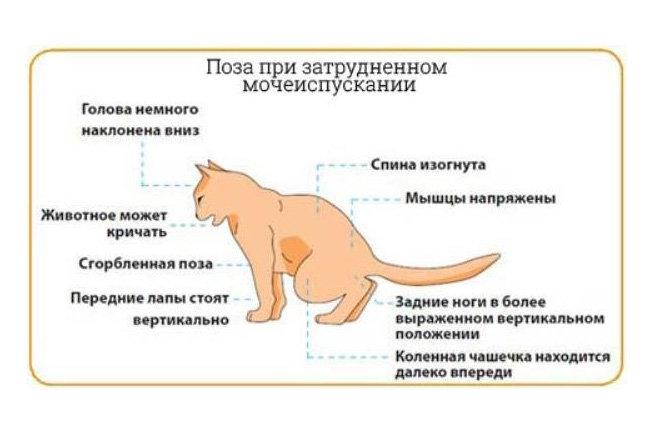 Причины возникновения и способы лечения кариеса у кошек