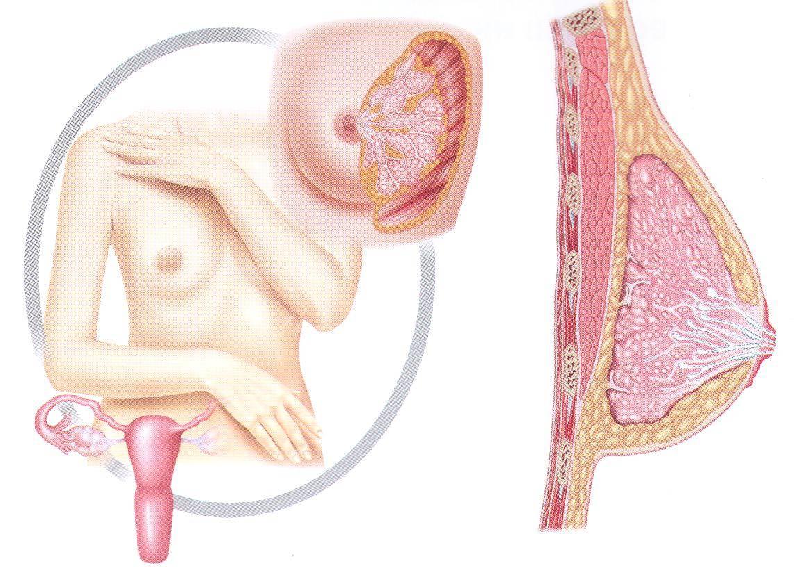 Что делать при набухании груди после месячных