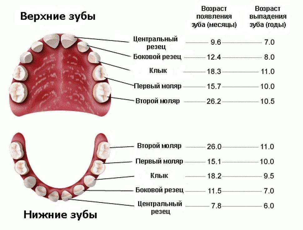 Когда у ребенка начинают выпадать молочные зубы