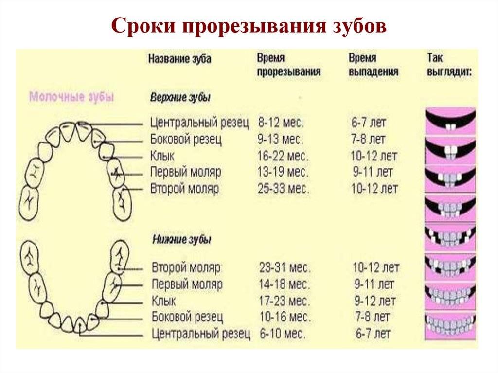 Прорезывание зубов у детей: порядок, признаки и как помочь ребенку