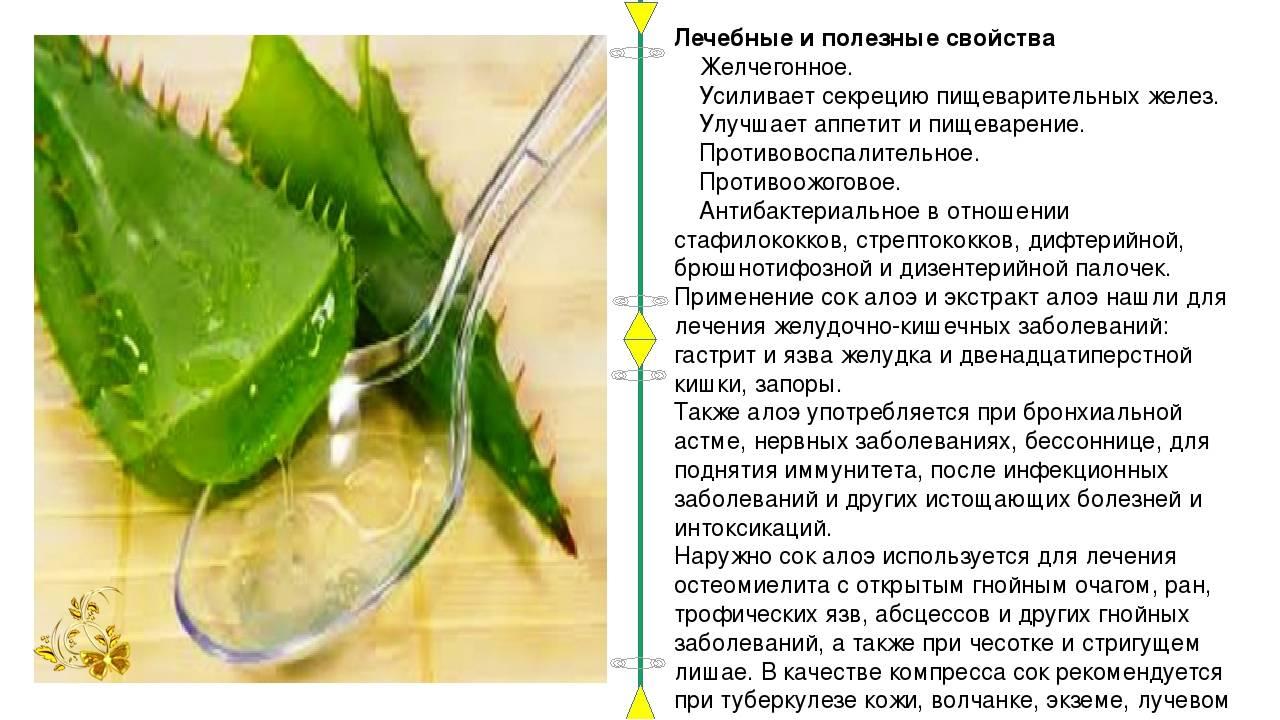 Лечение стоматита медом: целебное воздействие, рецепты и противопоказания