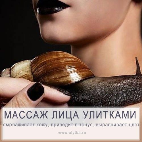 Косметический массаж лица улитками ахатинами: описание, рекомендации