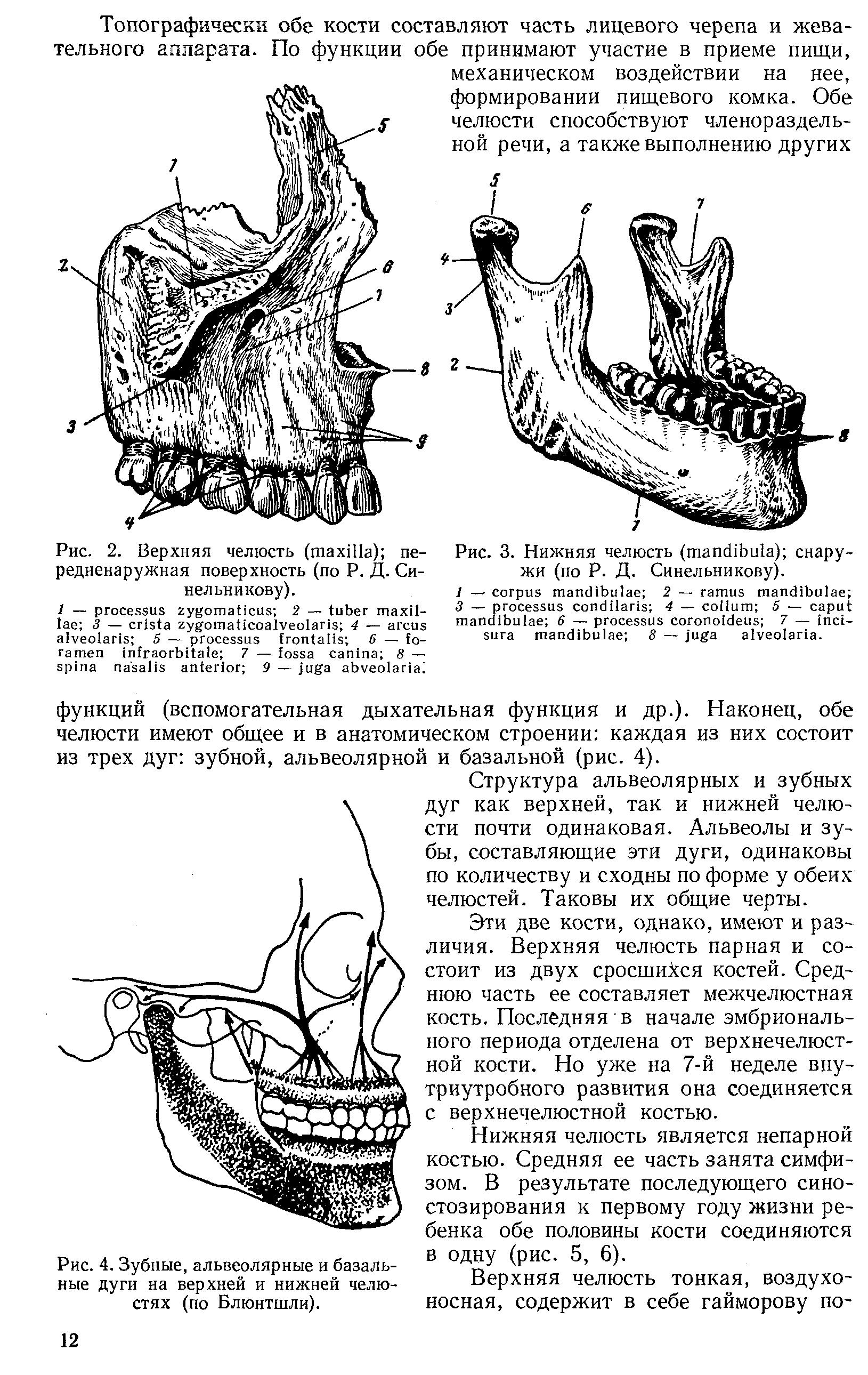 Строение и функции внчс