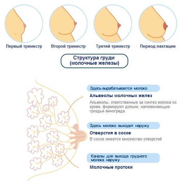 Болит грудь после менструации