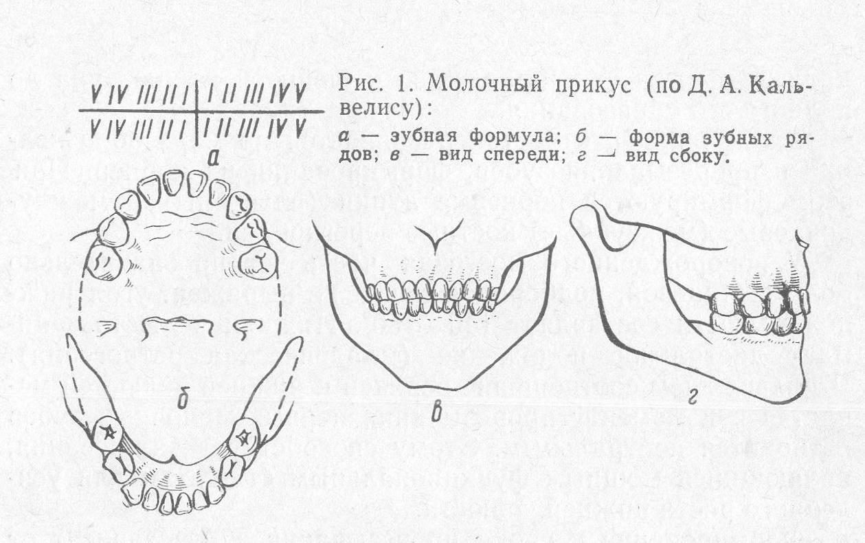 Как растут молочные и коренные зубы. сроки и таблицы